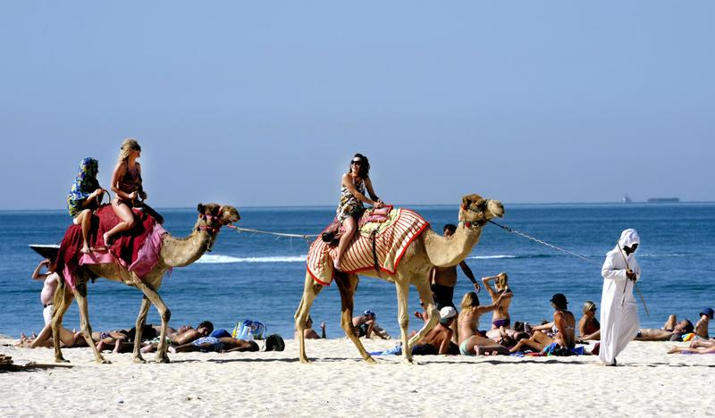 Places | Dubai & Qatar | Camel drivers | 00739365