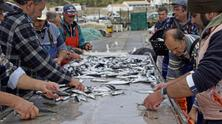 Sardines fishery in Portugal, 2016